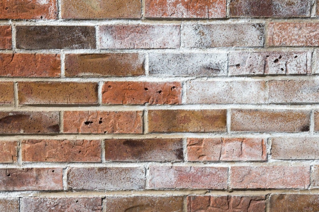 Brick wall with white efflorescence